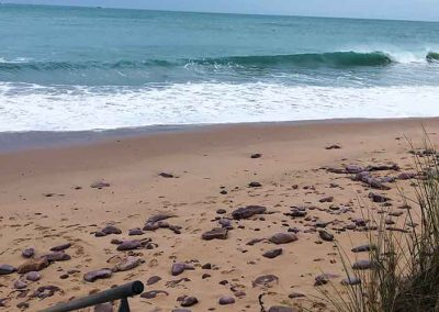 beach-800-500-low